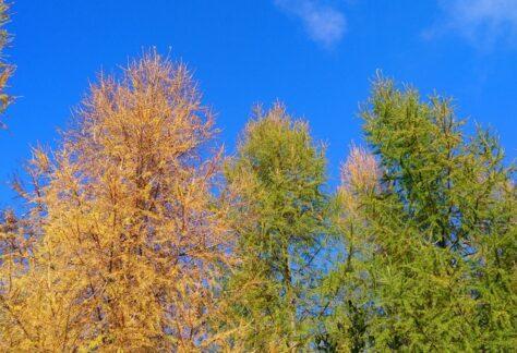 Ventron en automne